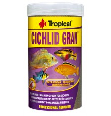 Tropical - Cichlid Gran