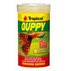 Tropical - Guppy