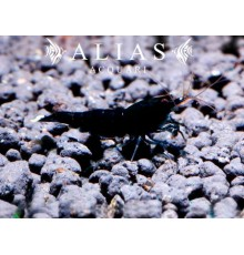Full Black Rili Shrimp