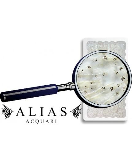 White Mosquito Larvae