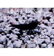 Full Black Rili Shrimp
