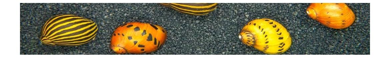 Lumache per acquario di acqua dolce